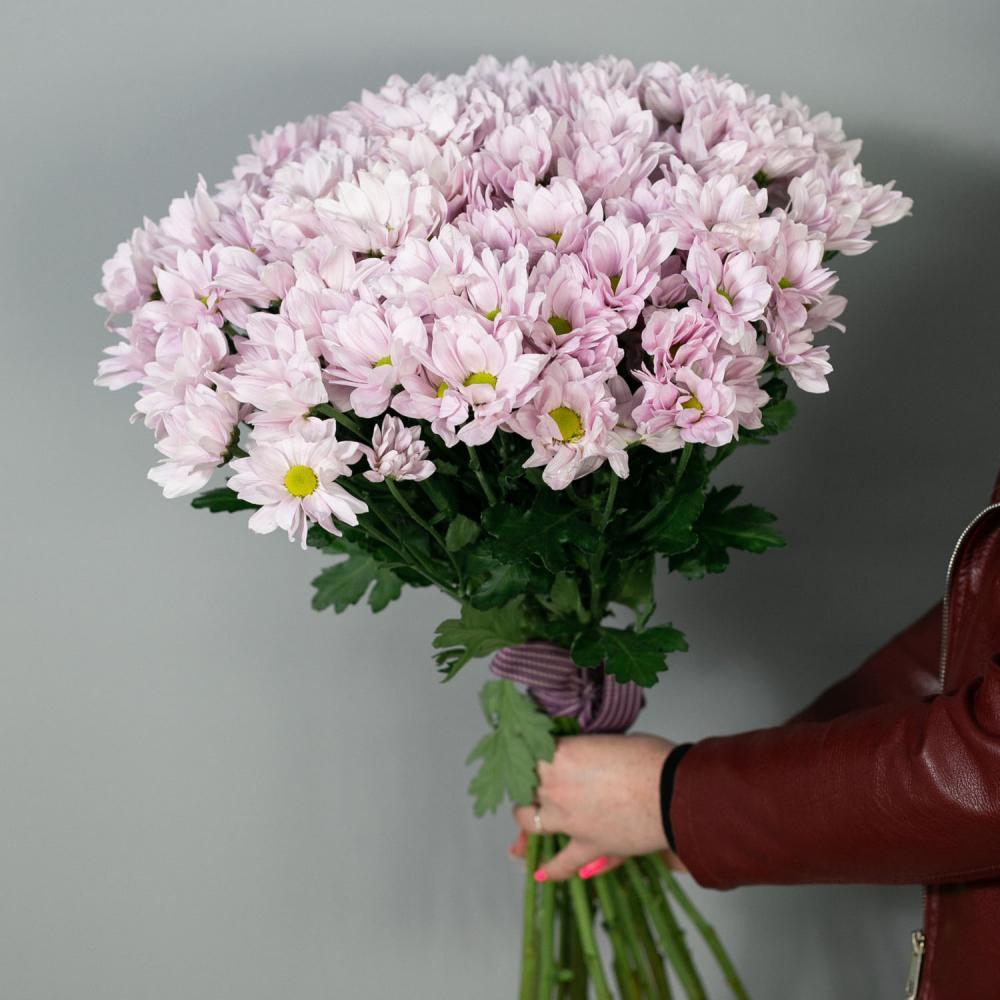 Букет из 15 розовых хризантем